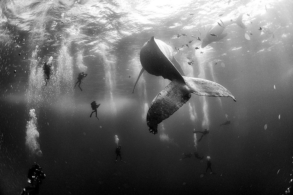 anuar-patjane-floriuk-whale-whisperers